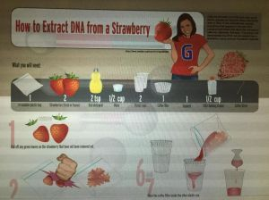 http://www.genome.gov/pages/education/modules/strawberryextractioninstructions.pdf