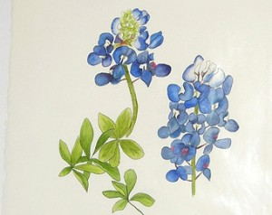 https://img0.etsystatic.com/028/1/7115164/il_340x270.530057718_hhie.jpg This is the bluebonnet painting for the large stall.