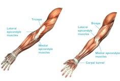 06-b-Anatomie-BottomImage_eng.jpg