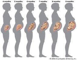 pregnancy-bump-month-by-month