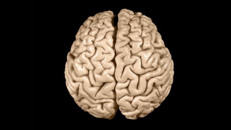 82391438_einstein27s-brain